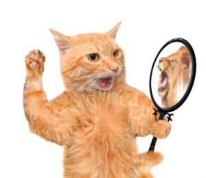Löwe - Selbstvertrauen und Selbstüberschätzung
